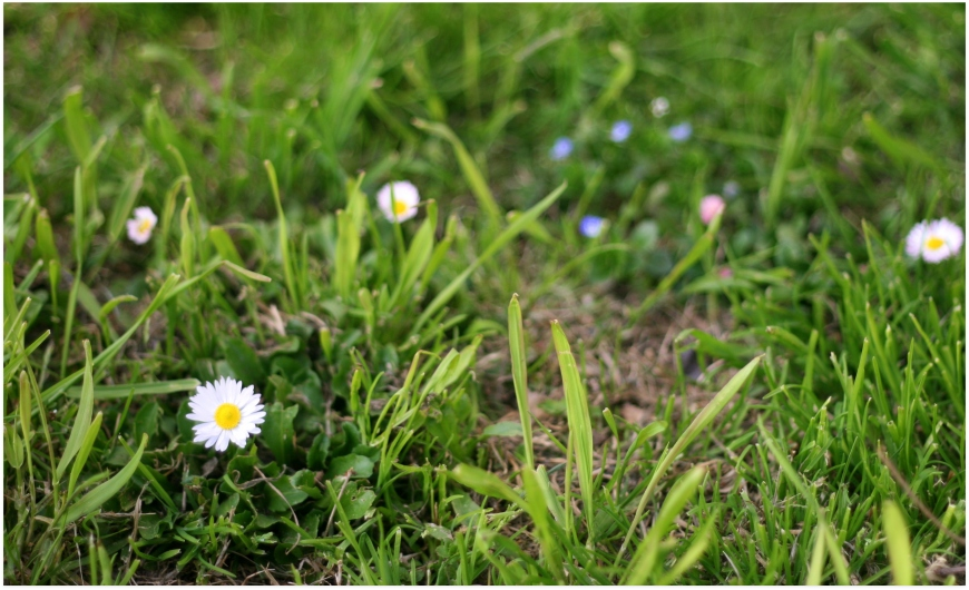 primavera 2013 (3)