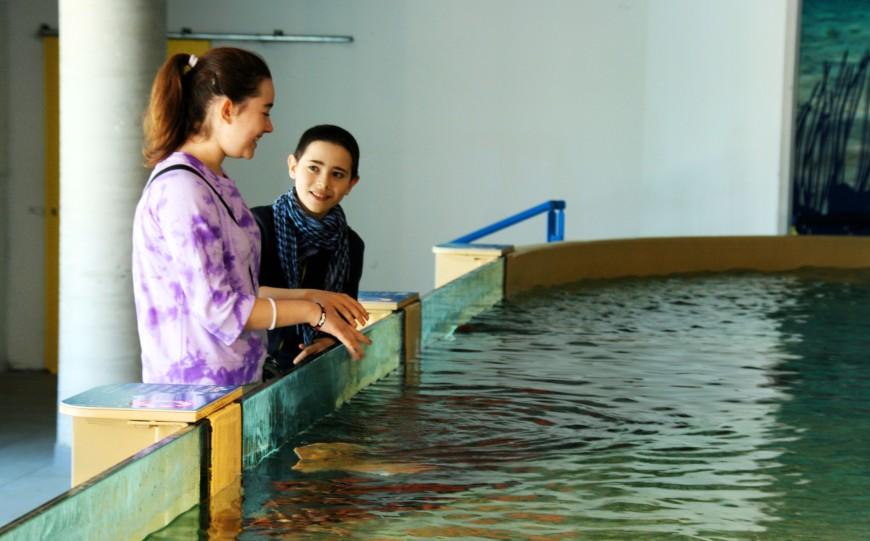 acquario cattolica (26)