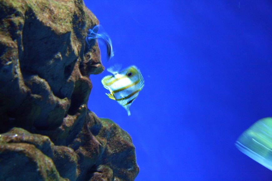acquario cattolica (8)