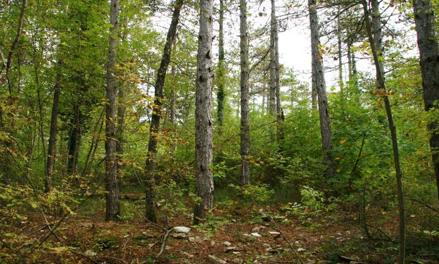 nel bosco (18)