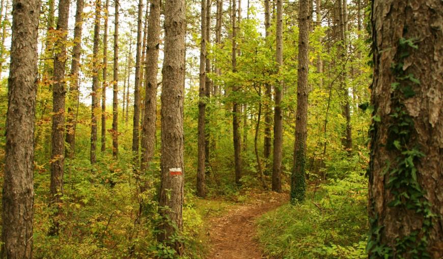 nel bosco (7)